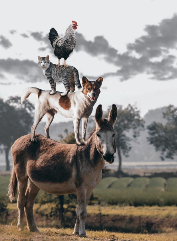 一头驴,一只狗,一只猫和一只公鸡